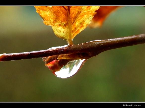 Herbst-Regentropfen